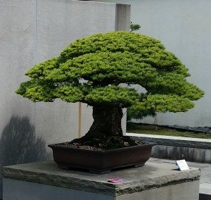 National Bonsai and Penjing Museum